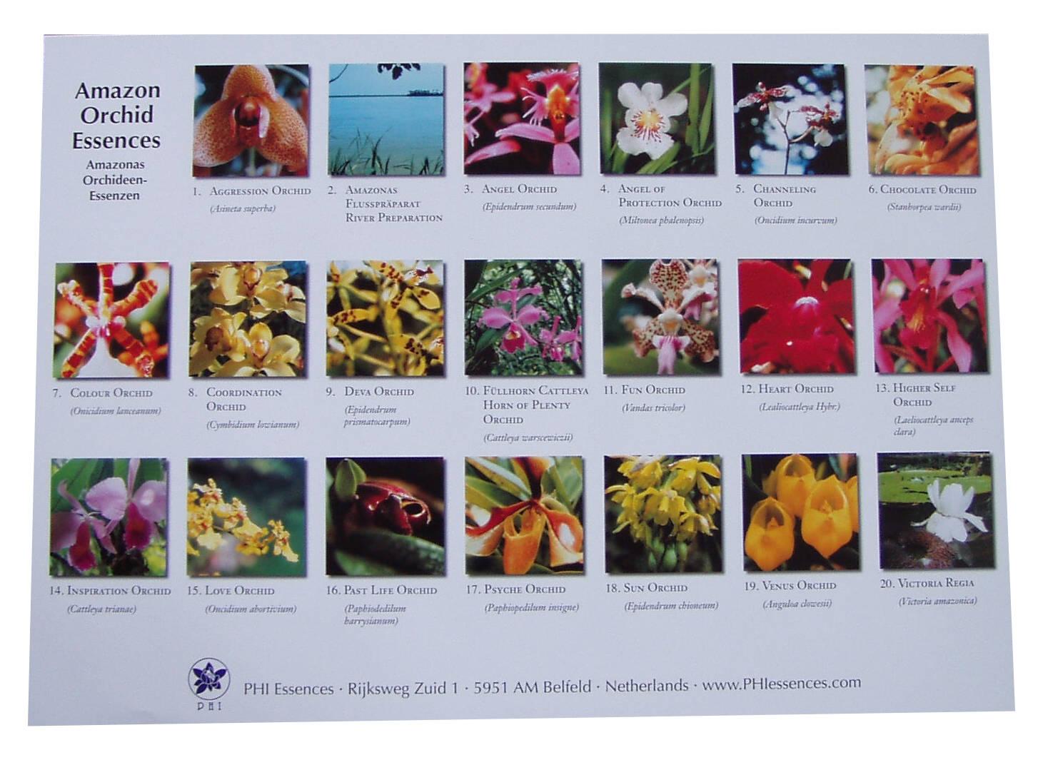 Poster Esencias de Orquídeas