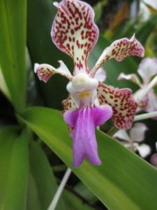 Orquideas Del Amazonas Andreas Korte Precio