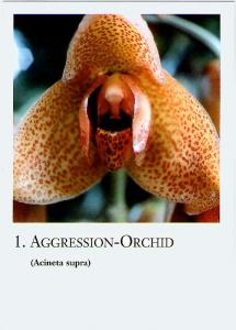 Orchid Flower-Cards, 20 pieces